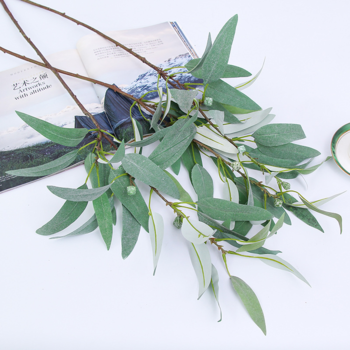 85cm - Willow Eucalyptus Branch with Gum Nuts